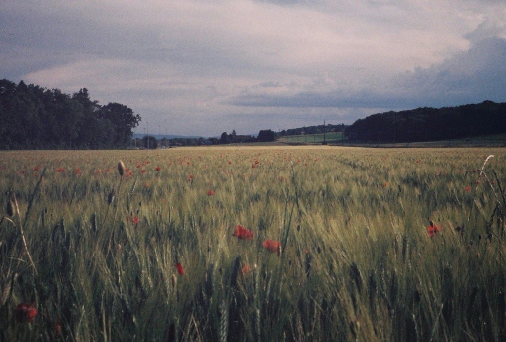 photo by Edurne Morillo showing a field