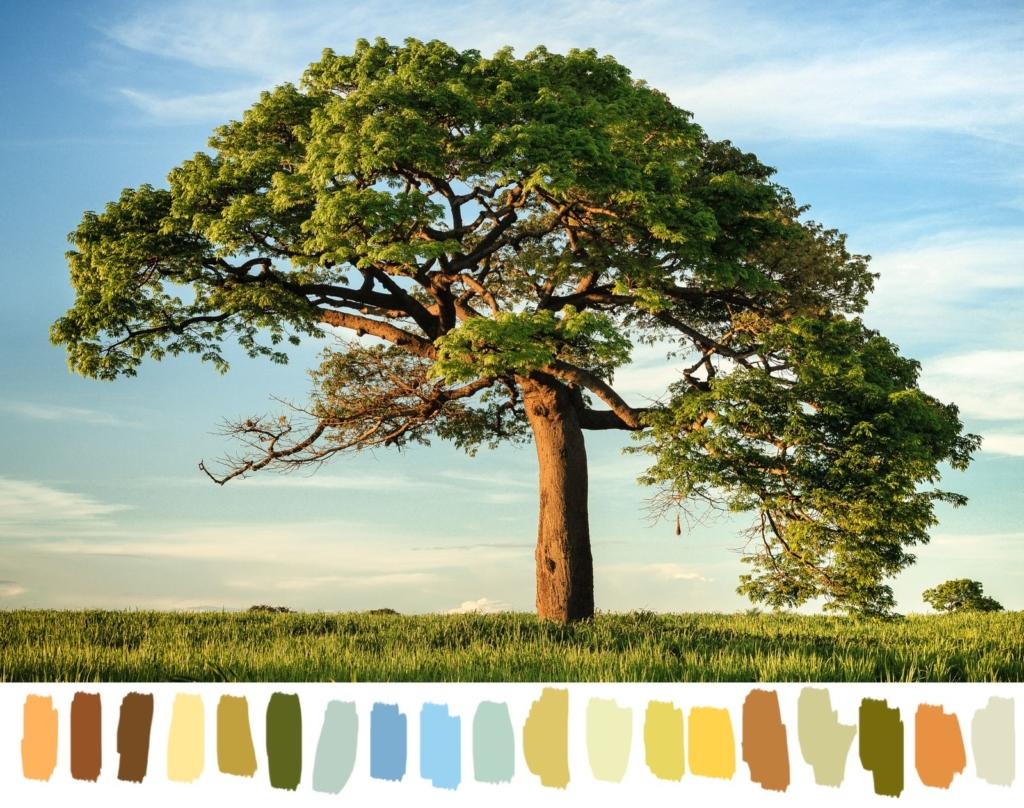 photo of a tree